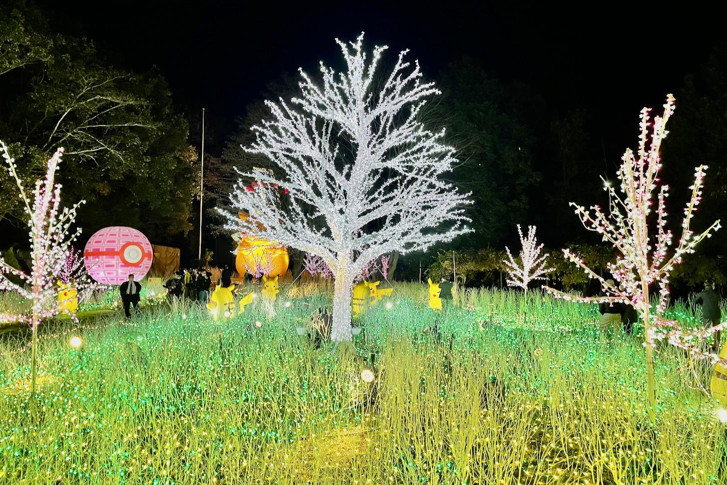 ピカチュウの光の森のピカチュウ